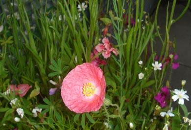 flowersoforegon11.jpg