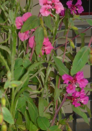 flowersoforegon2.jpg