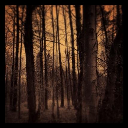 Mama, wenn es Gott gibt, wo wohnt er? Wenn es Gott gibt, dann wohnt er im Wald.