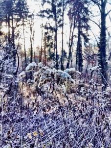 Frostblumen