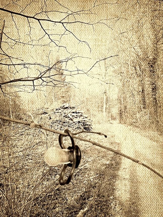 Der Nuggi im Wald